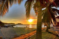 Chahue-palm-tree-sunset